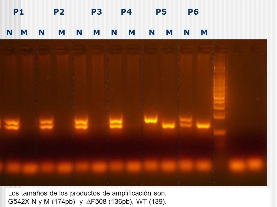 5IVS-11 G542X-M N y M:174 pb G542X-N t