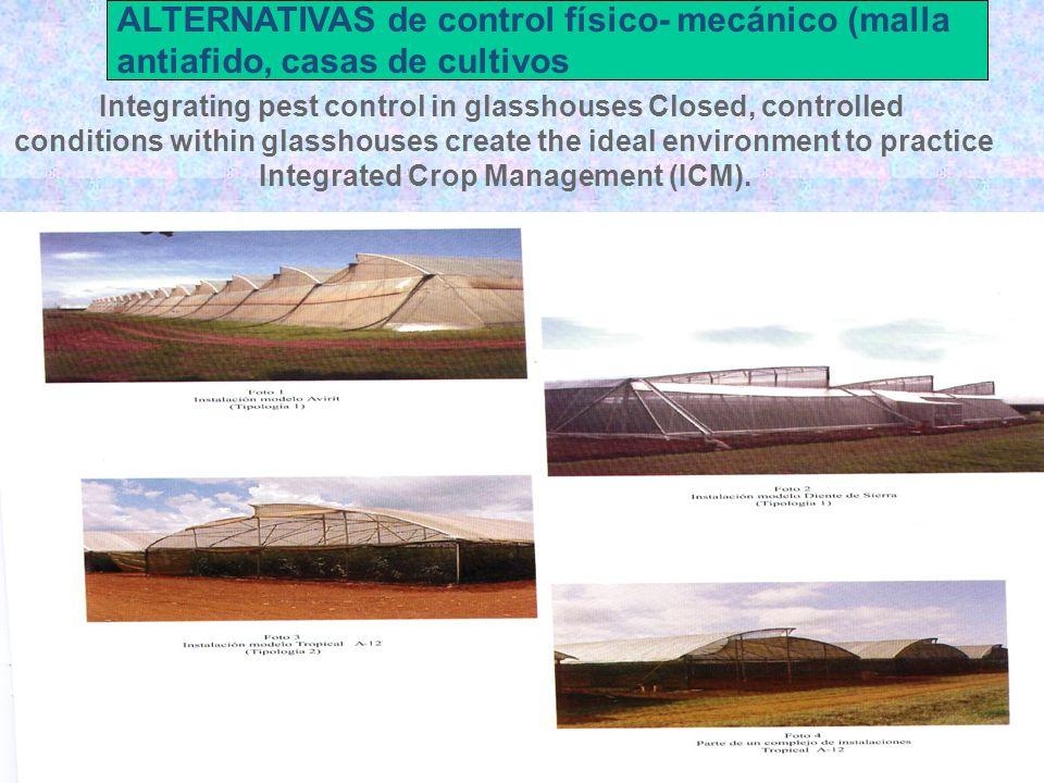 ALTERNATIVAS de control físico- mecánico (malla antiafido, casas de cultivos Integrating pest control in glasshouses Closed, controlled conditions wit