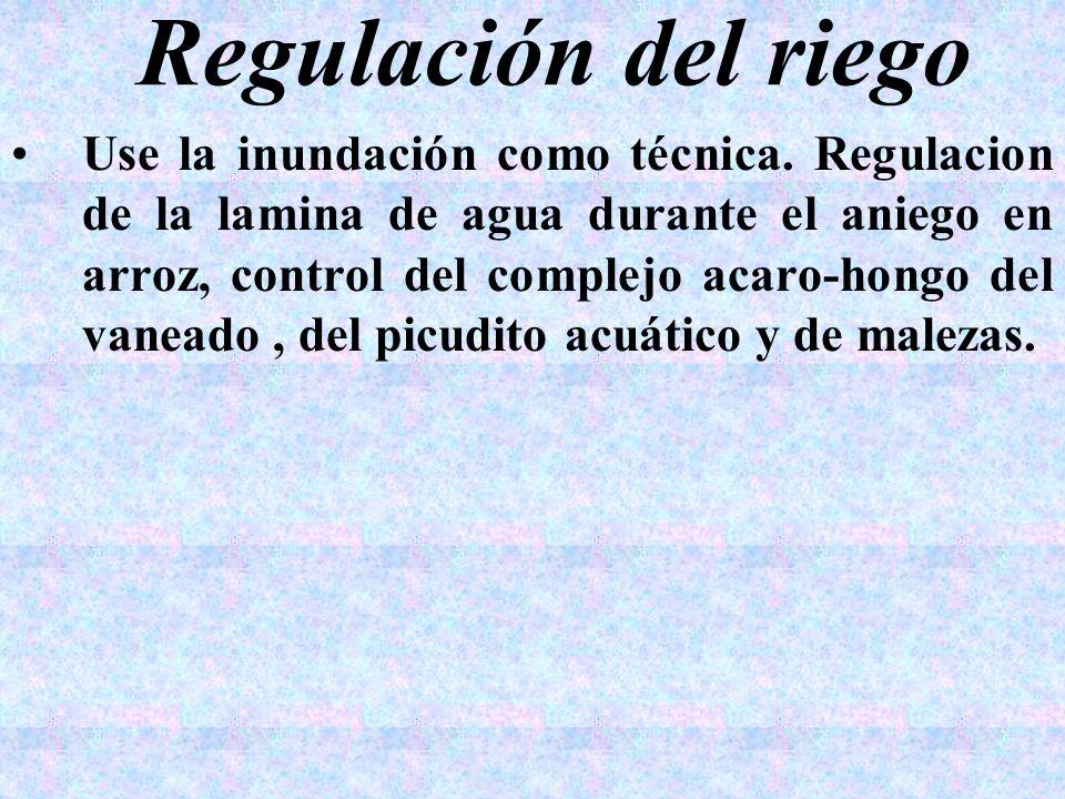 Regulación del riego Use la inundación como técnica. Regulacion de la lamina de agua durante el aniego en arroz, control del complejo acaro-hongo del