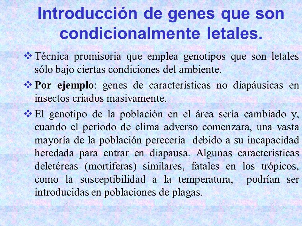 Introducción de genes que son condicionalmente letales. Técnica promisoria que emplea genotipos que son letales sólo bajo ciertas condiciones del ambi