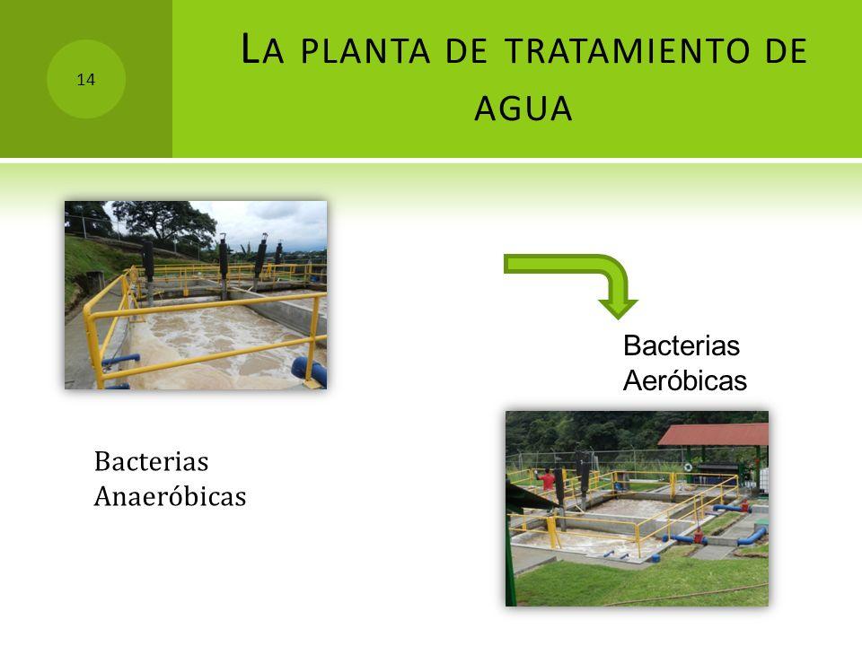 L A PLANTA DE TRATAMIENTO DE AGUA Bacterias Aeróbicas Bacterias Anaeróbicas 14
