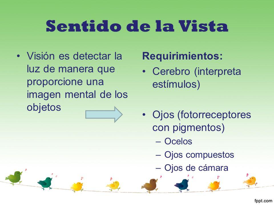 Sentido de la Vista Visión es detectar la luz de manera que proporcione una imagen mental de los objetos Requirimientos: Cerebro (interpreta estímulos