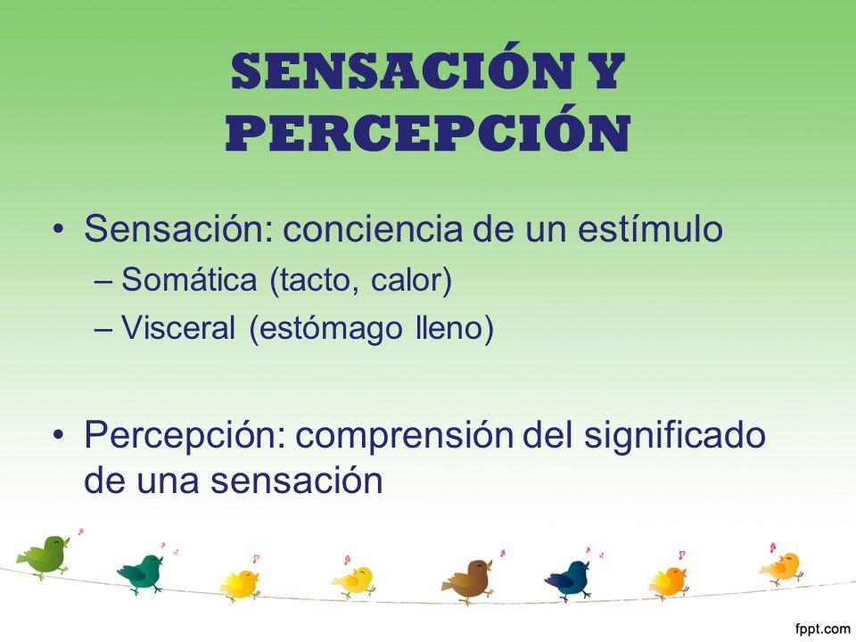 SENSACIÓN Y PERCEPCIÓN Sensación: conciencia de un estímulo –Somática (tacto, calor) –Visceral (estómago lleno) Percepción: comprensión del significad