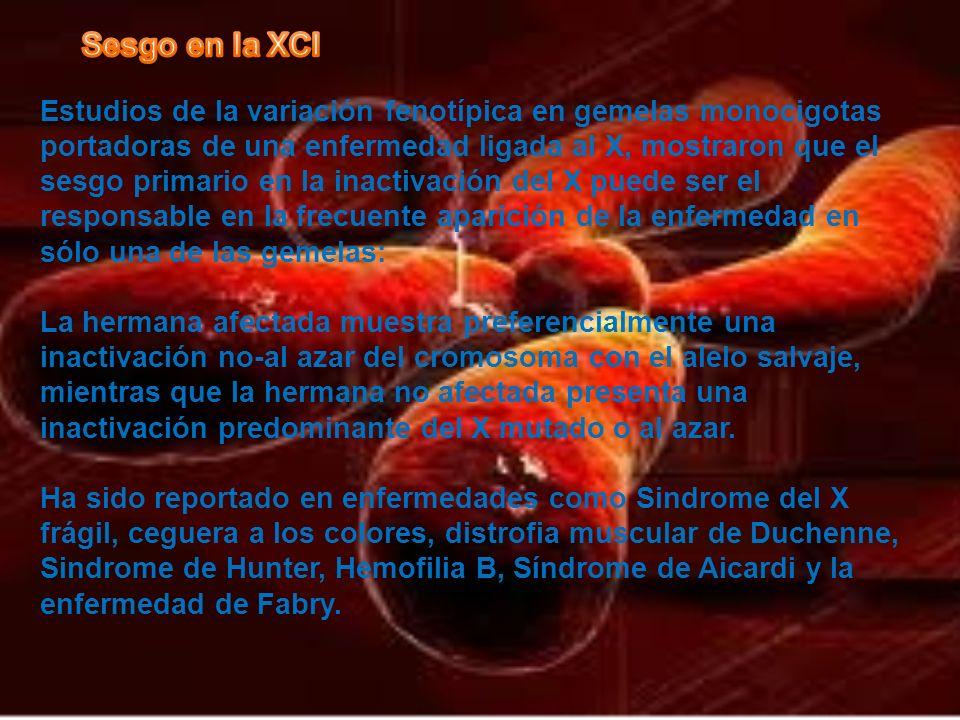 Estudios de la variación fenotípica en gemelas monocigotas portadoras de una enfermedad ligada al X, mostraron que el sesgo primario en la inactivació