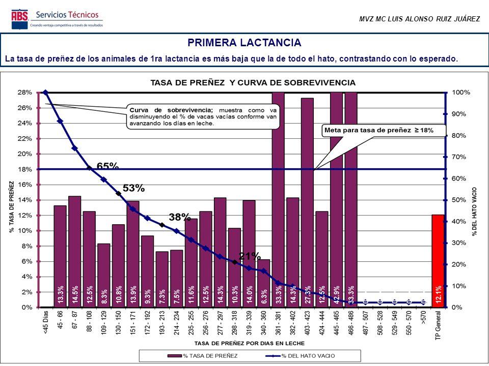 MVZ MC LUIS ALONSO RUIZ JUÁREZ PRIMERA LACTANCIA La tasa de preñez de los animales de 1ra lactancia es más baja que la de todo el hato, contrastando con lo esperado.
