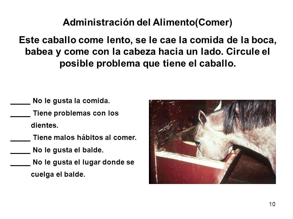 10 Administración del Alimento(Comer) Este caballo come lento, se le cae la comida de la boca, babea y come con la cabeza hacia un lado. Circule el po