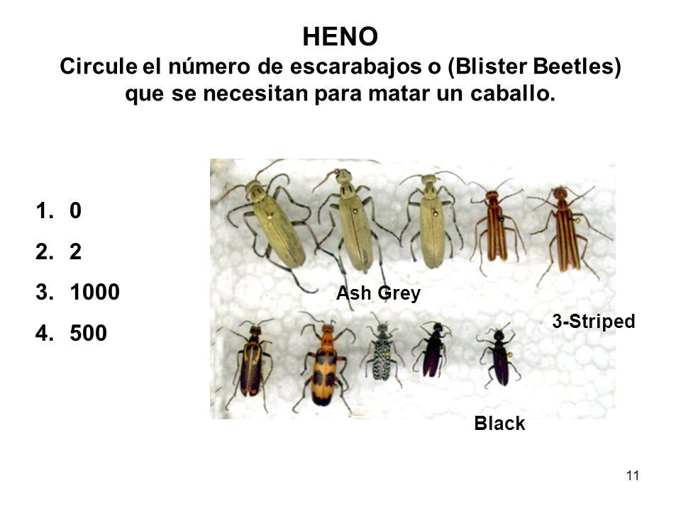 11 Ash Grey 3-Striped Black HENO Circule el número de escarabajos o (Blister Beetles) que se necesitan para matar un caballo. 1.0 2.2 3.1000 4.500