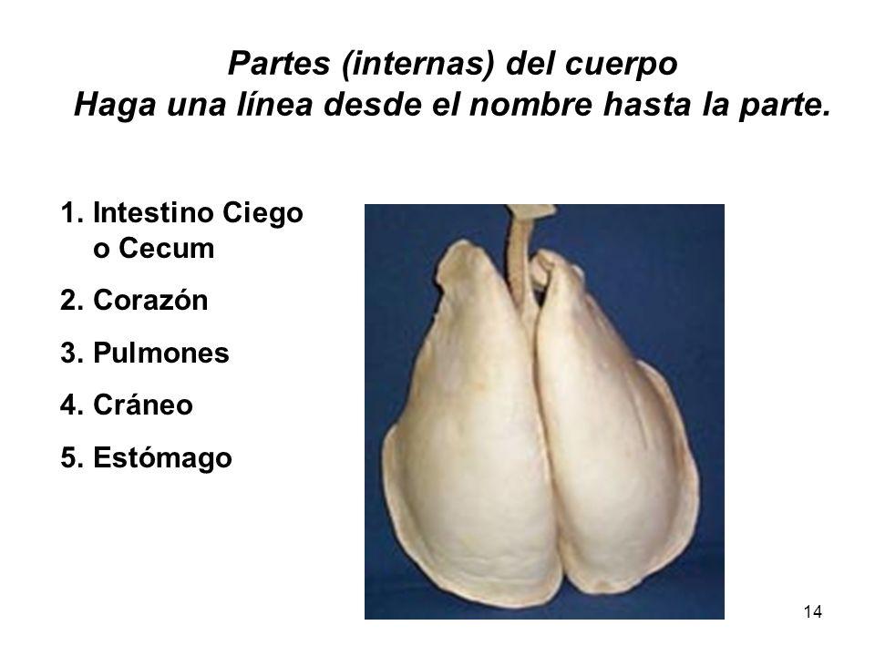 14 Partes (internas) del cuerpo Haga una línea desde el nombre hasta la parte. 1.Intestino Ciego o Cecum 2.Corazón 3.Pulmones 4.Cráneo 5.Estómago