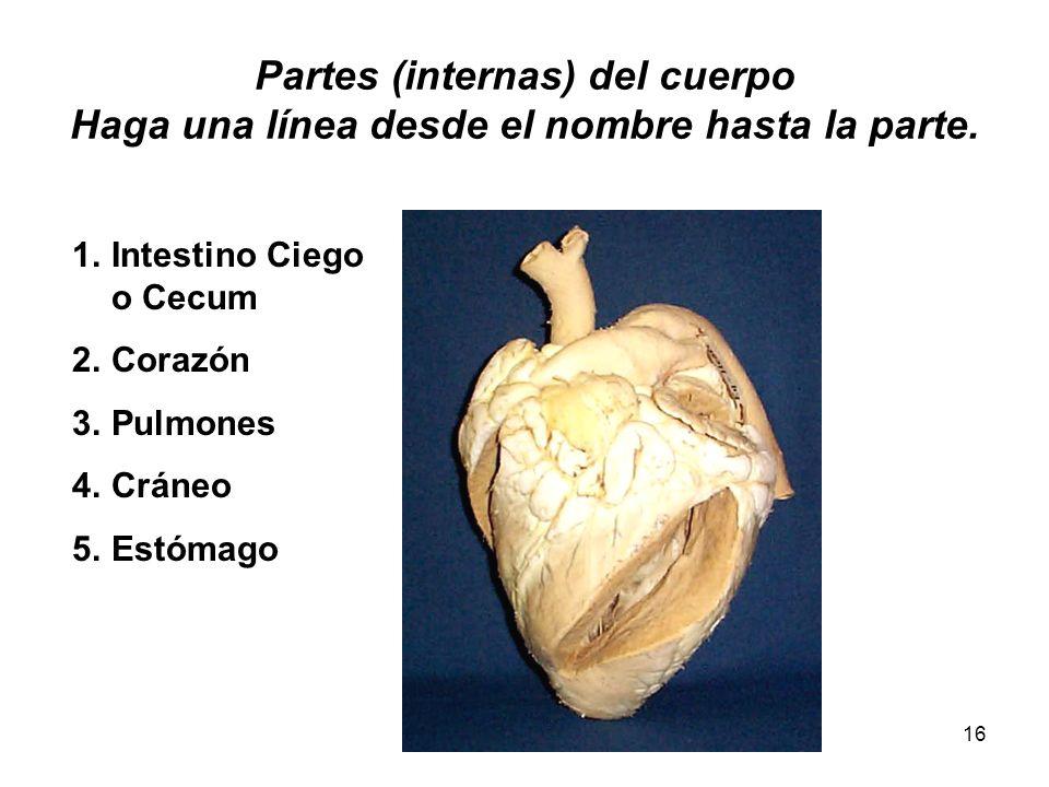 16 Partes (internas) del cuerpo Haga una línea desde el nombre hasta la parte. 1.Intestino Ciego o Cecum 2.Corazón 3.Pulmones 4.Cráneo 5.Estómago