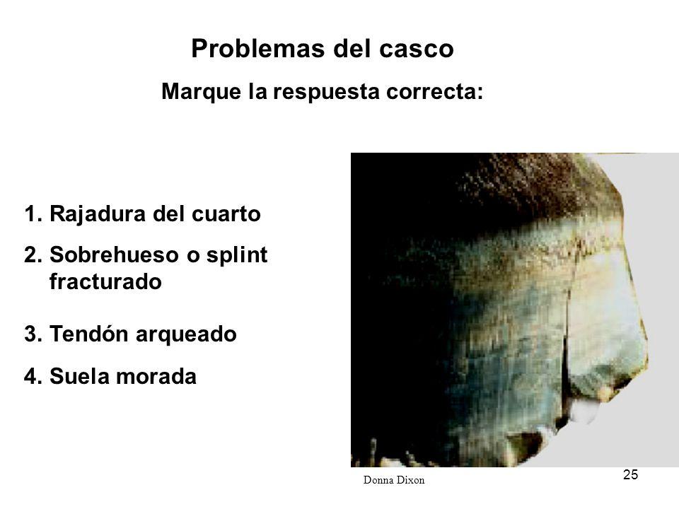 25 Donna Dixon Problemas del casco Marque la respuesta correcta: 1.Rajadura del cuarto 2.Sobrehueso o splint fracturado 3.Tendón arqueado 4.Suela mora