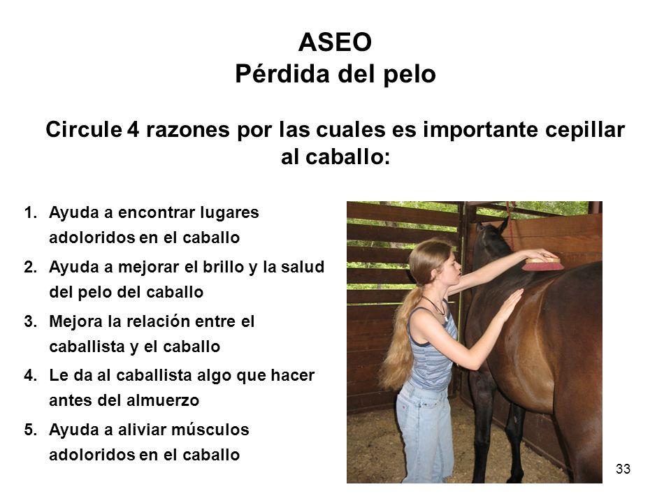 33 ASEO Pérdida del pelo Circule 4 razones por las cuales es importante cepillar al caballo: 1.Ayuda a encontrar lugares adoloridos en el caballo 2.Ay