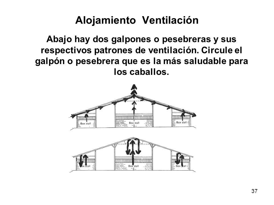 37 Alojamiento Ventilación Abajo hay dos galpones o pesebreras y sus respectivos patrones de ventilación. Circule el galpón o pesebrera que es la más