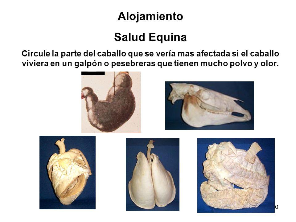40 Alojamiento Salud Equina Circule la parte del caballo que se vería mas afectada si el caballo viviera en un galpón o pesebreras que tienen mucho po