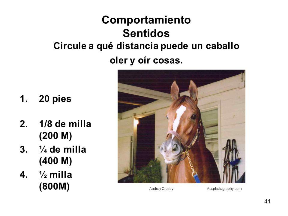 41 Comportamiento Sentidos Circule a qué distancia puede un caballo oler y oír cosas. 1.20 pies 2.1/8 de milla (200 M) 3.¼ de milla (400 M) 4.½ milla
