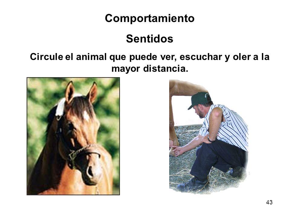 43 Comportamiento Sentidos Circule el animal que puede ver, escuchar y oler a la mayor distancia.