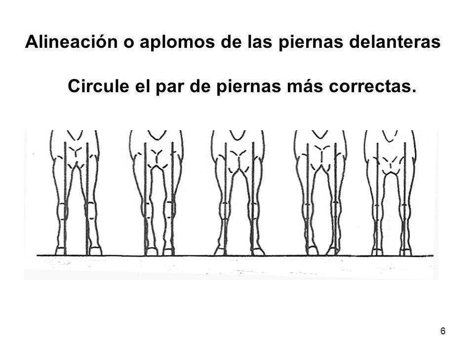 6 Alineación o aplomos de las piernas delanteras Circule el par de piernas más correctas.