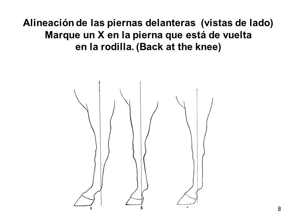 8 Alineación de las piernas delanteras (vistas de lado) Marque un X en la pierna que está de vuelta en la rodilla. (Back at the knee)