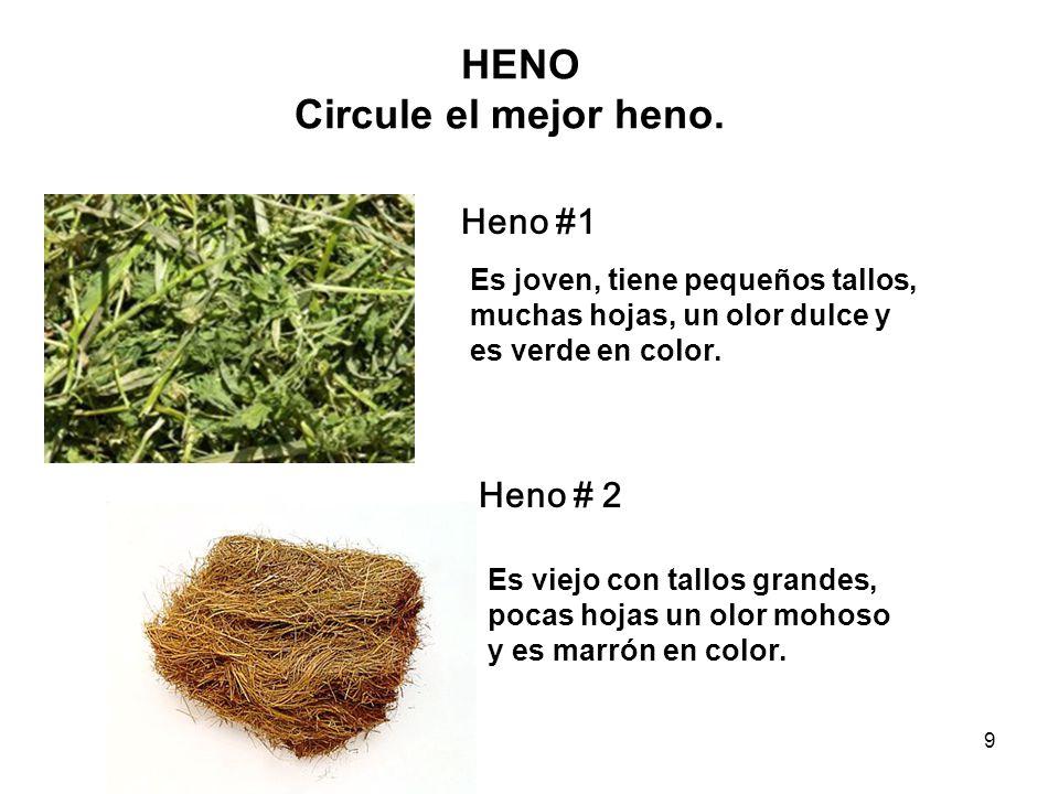 9 HENO Circule el mejor heno. Es joven, tiene pequeños tallos, muchas hojas, un olor dulce y es verde en color. Es viejo con tallos grandes, pocas hoj