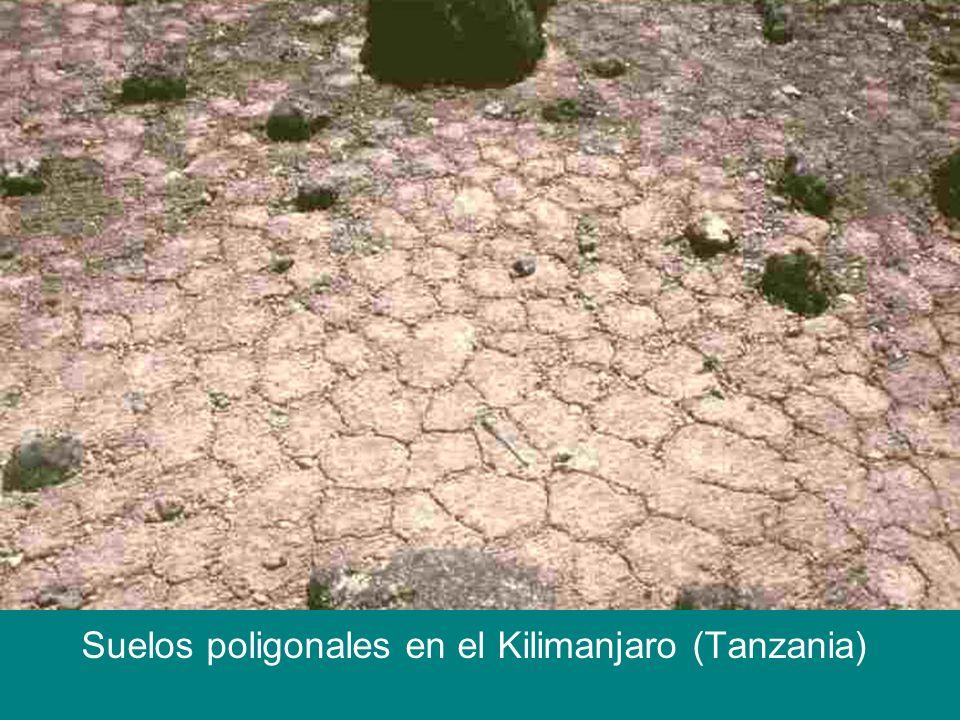 Suelos poligonales en el Kilimanjaro (Tanzania)