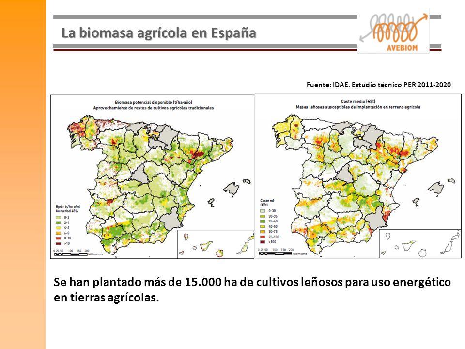 La biomasa agrícola en España Fuente: IDAE. Estudio técnico PER 2011-2020 Se han plantado más de 15.000 ha de cultivos leñosos para uso energético en