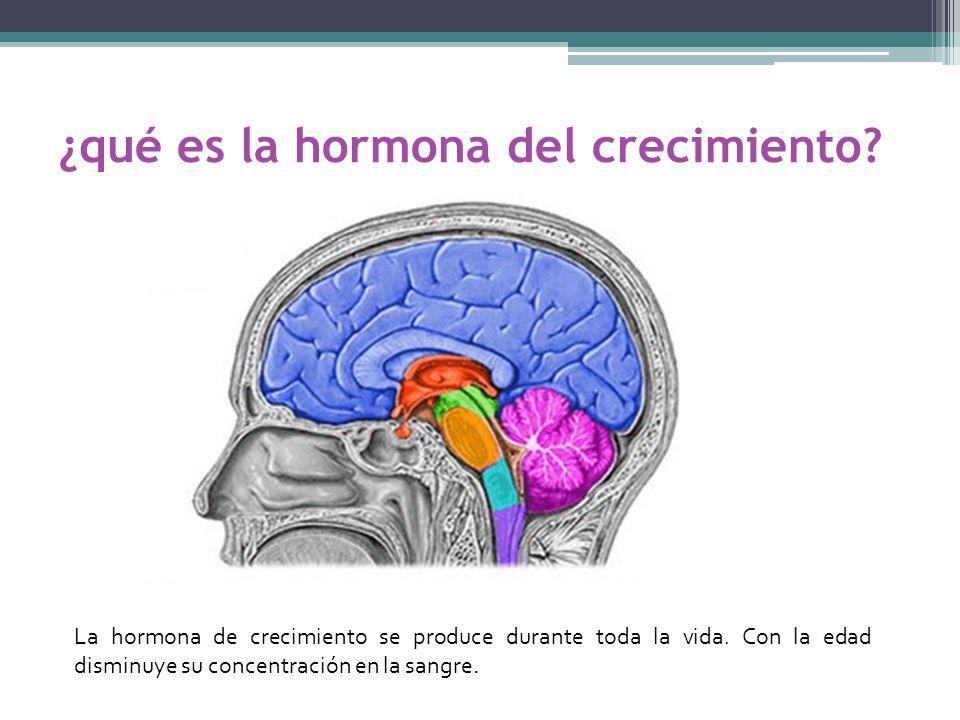¿qué es la hormona del crecimiento? La hormona de crecimiento se produce durante toda la vida. Con la edad disminuye su concentración en la sangre.