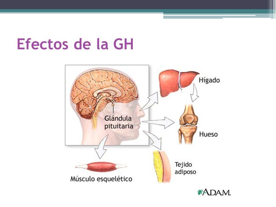 Efectos de la GH