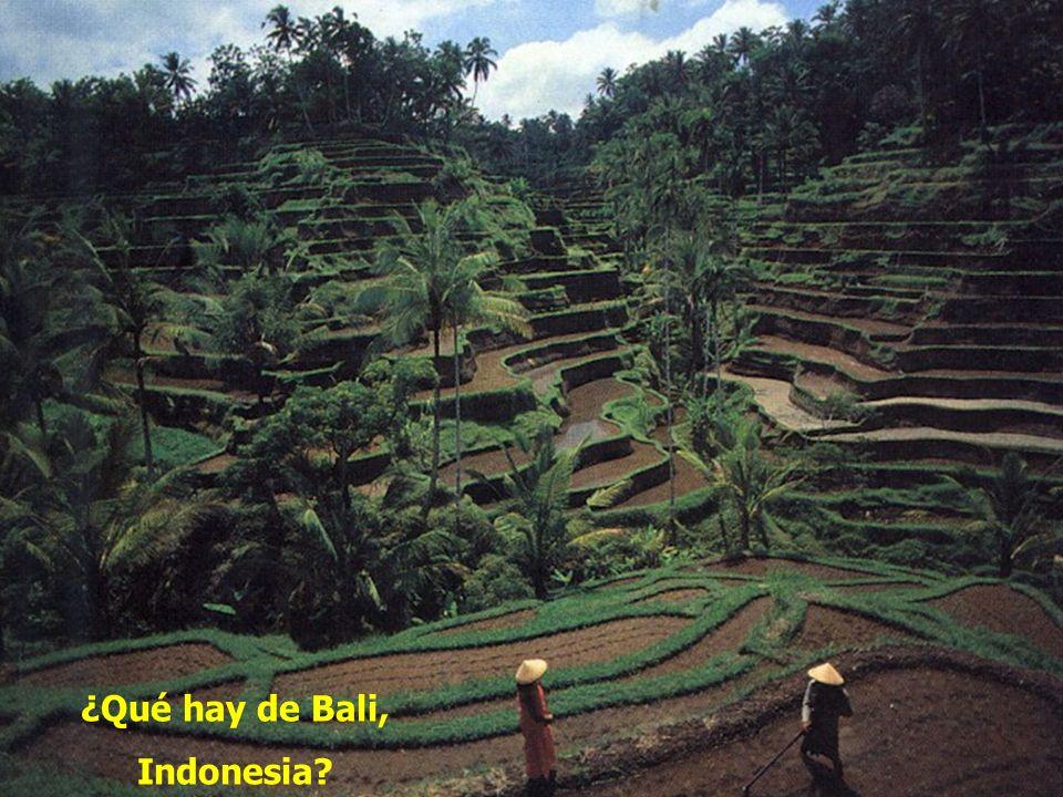 ¿Qué hay de Bali, Indonesia?