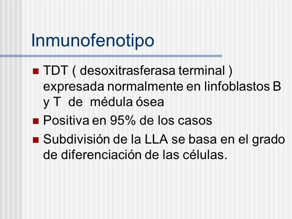 Inmunofenotipo TDT ( desoxitrasferasa terminal ) expresada normalmente en linfoblastos B y T de médula ósea Positiva en 95% de los casos Subdivisión d