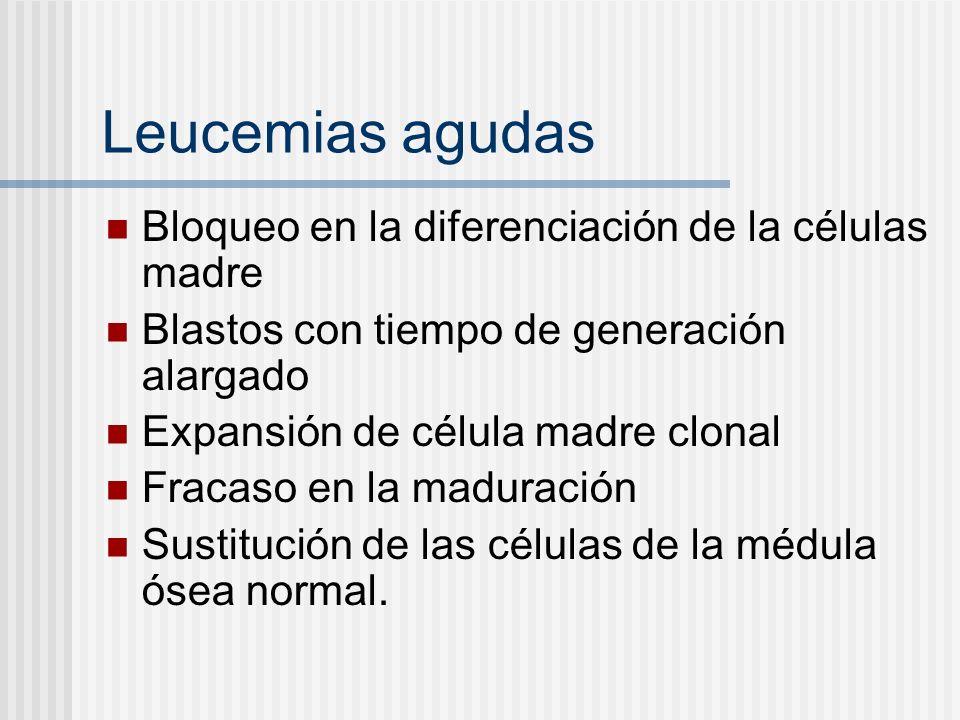 Leucemias agudas Bloqueo en la diferenciación de la células madre Blastos con tiempo de generación alargado Expansión de célula madre clonal Fracaso e