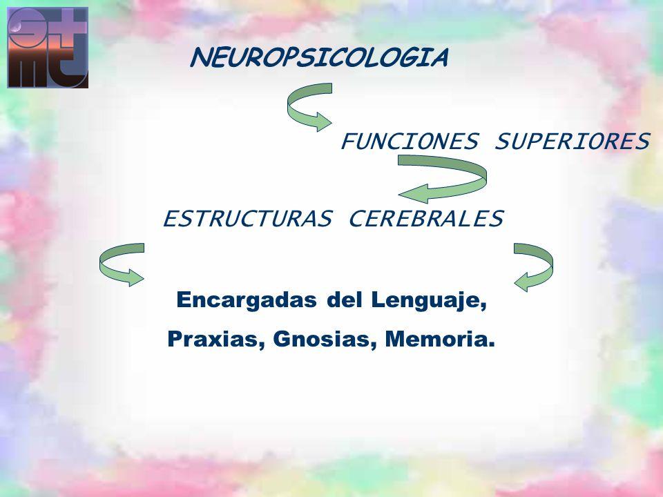 FUNCIONES SUPERIORES ESTRUCTURAS CEREBRALES Encargadas del Lenguaje, Praxias, Gnosias, Memoria. NEUROPSICOLOGIA
