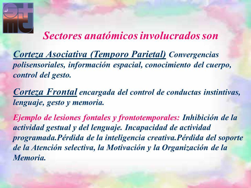 Sectores anatómicos involucrados son Corteza Asociativa (Temporo Parietal) Convergencias polisensoriales, información espacial, conocimiento del cuerp