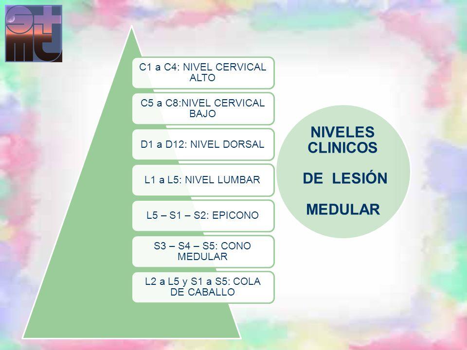 NIVELES CLINICOS DE LESIÓN MEDULAR C1 a C4: NIVEL CERVICAL ALTO C5 a C8:NIVEL CERVICAL BAJO D1 a D12: NIVEL DORSALL1 a L5: NIVEL LUMBARL5 – S1 – S2: E