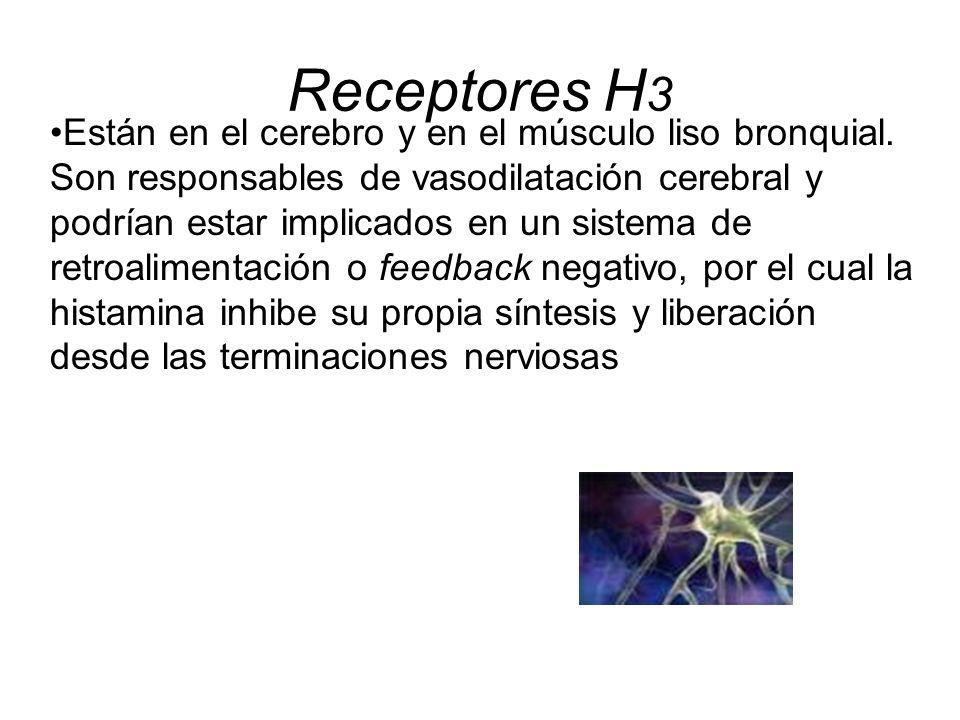 Receptores H 3 Están en el cerebro y en el músculo liso bronquial. Son responsables de vasodilatación cerebral y podrían estar implicados en un sistem