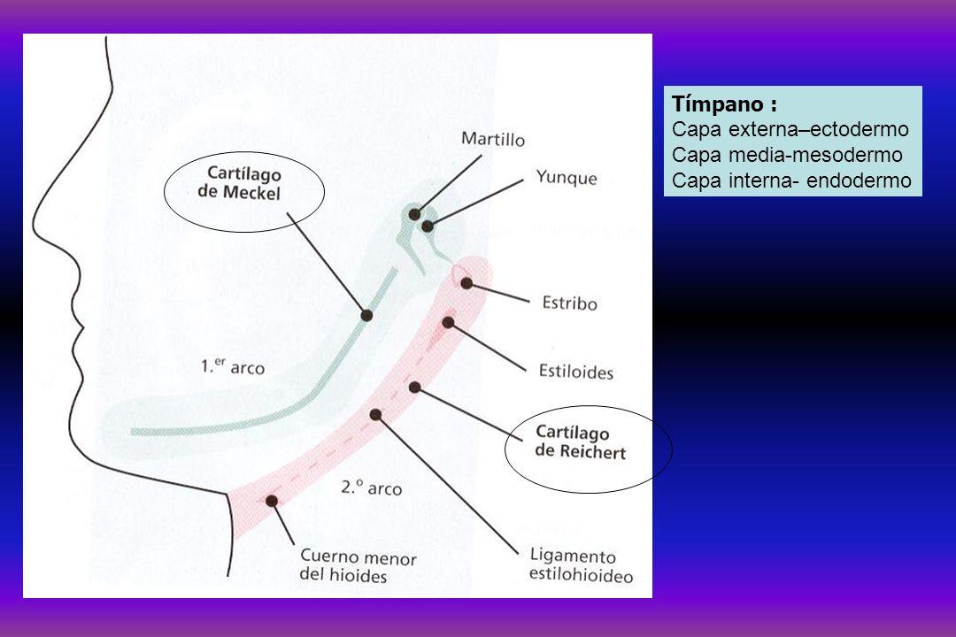 Oido medio Hipoacusias de transmisión o conducción Hipoacusias neurosensoriales COCLEARES RETROC.