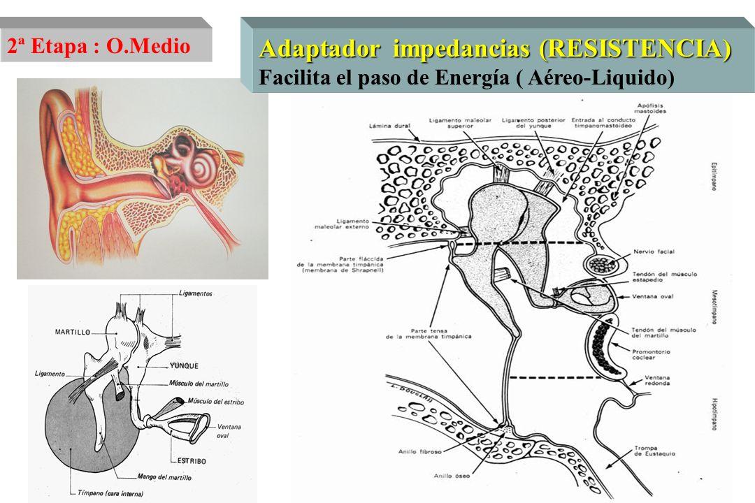 Laberintización Estapedotomía Estapedectomía