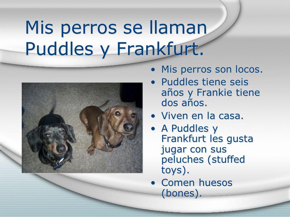 Mis perros se llaman Puddles y Frankfurt. Mis perros son locos. Puddles tiene seis años y Frankie tiene dos años. Viven en la casa. A Puddles y Frankf