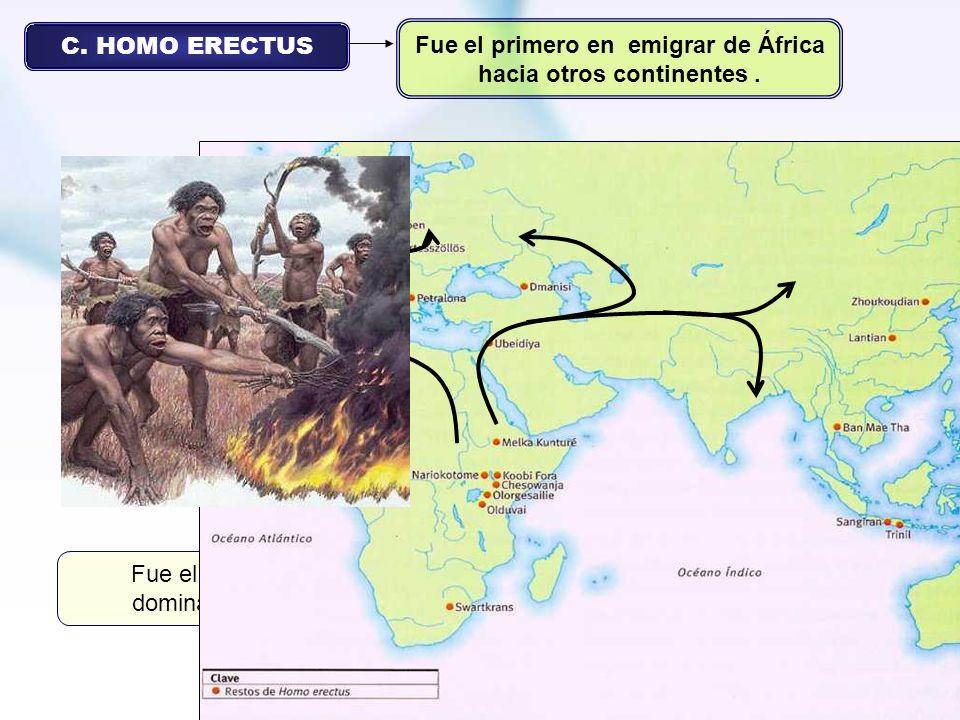 C. HOMO ERECTUS Fue el primero en emigrar de África hacia otros continentes. Vivió entre el 1,8 millón y los 130.000 años atrás. Debe su nombre a su e