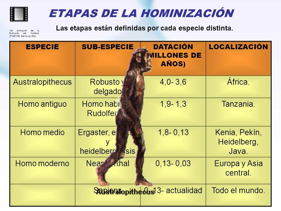 ETAPAS DE LA HOMINIZACIÓN ESPECIESUB-ESPECIEDATACIÓN (MILLONES DE AÑOS) LOCALIZACIÓN AustralopithecusRobusto y delgado 4,0- 3,6África. Homo antiguoHom