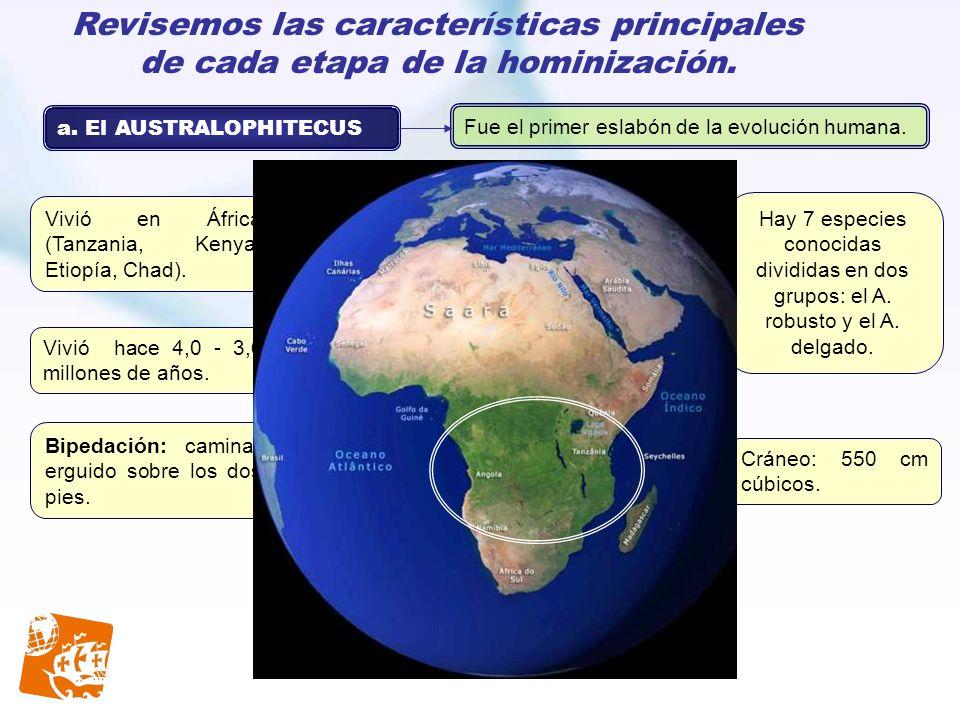 Revisemos las características principales de cada etapa de la hominización. a. El AUSTRALOPHITECUS Fue el primer eslabón de la evolución humana. Vivió