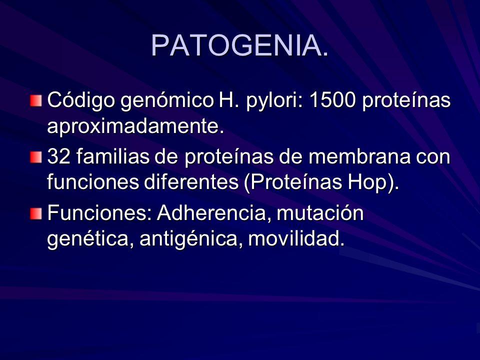 PATOGENIA. Código genómico H. pylori: 1500 proteínas aproximadamente. 32 familias de proteínas de membrana con funciones diferentes (Proteínas Hop). F