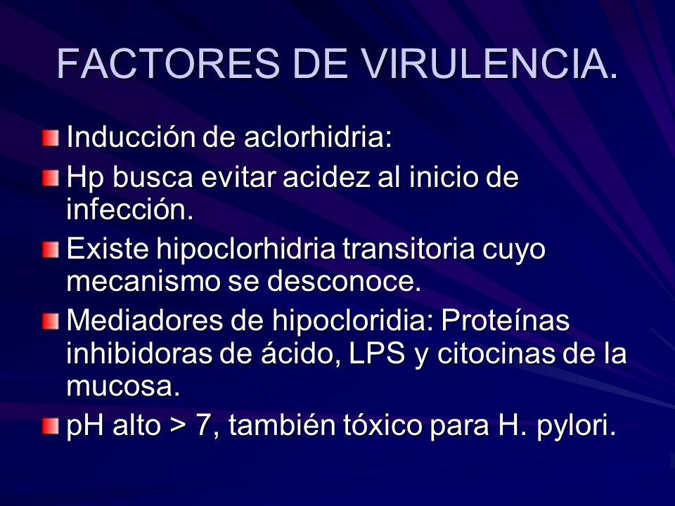 FACTORES DE VIRULENCIA. Inducción de aclorhidria: Hp busca evitar acidez al inicio de infección. Existe hipoclorhidria transitoria cuyo mecanismo se d