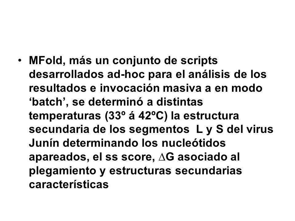MFold, más un conjunto de scripts desarrollados ad-hoc para el análisis de los resultados e invocación masiva a en modo batch, se determinó a distinta