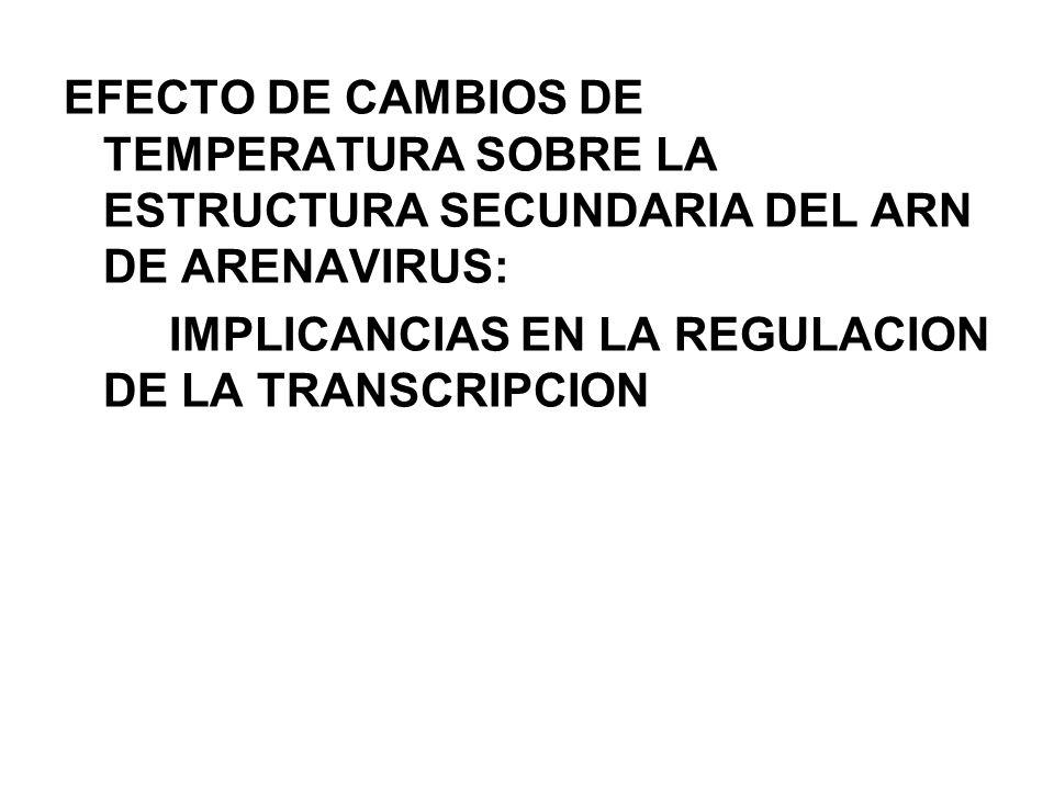 EFECTO DE CAMBIOS DE TEMPERATURA SOBRE LA ESTRUCTURA SECUNDARIA DEL ARN DE ARENAVIRUS: IMPLICANCIAS EN LA REGULACION DE LA TRANSCRIPCION