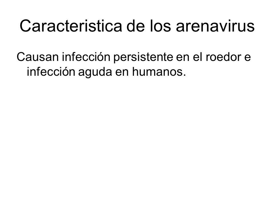 FH Argentina: síntomas clínicos Comienzo: fiebre, mialgia, anormalidades en células hematopoyéticas, anorexia, dolor epigástrico.