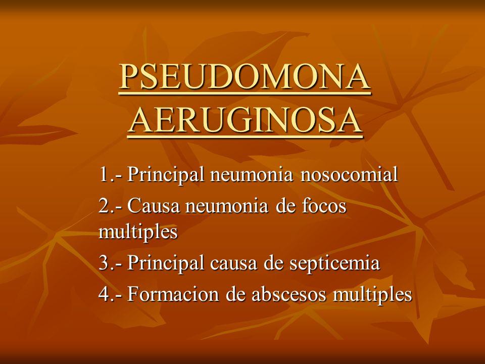 PSEUDOMONA AERUGINOSA 1.- Principal neumonia nosocomial 2.- Causa neumonia de focos multiples 3.- Principal causa de septicemia 4.- Formacion de absce