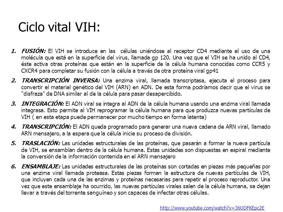Ciclo vital VIH: 1.FUSIÓN: El VIH se introduce en las células uniéndose al receptor CD4 mediante el uso de una molécula que está en la superficie del