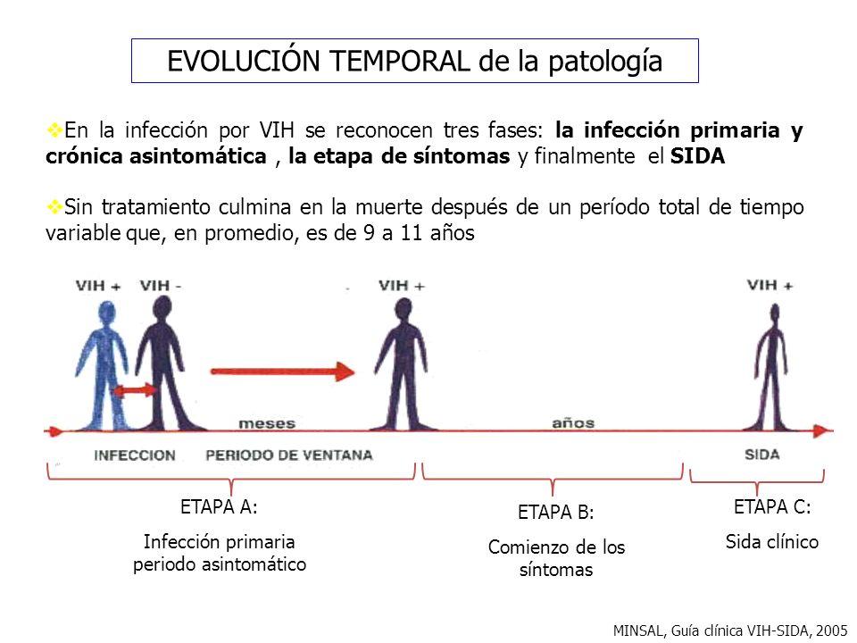 ETAPA A: Infección primaria periodo asintomático ETAPA B: Comienzo de los síntomas ETAPA C: Sida clínico MINSAL, Guía clínica VIH-SIDA, 2005 EVOLUCIÓN