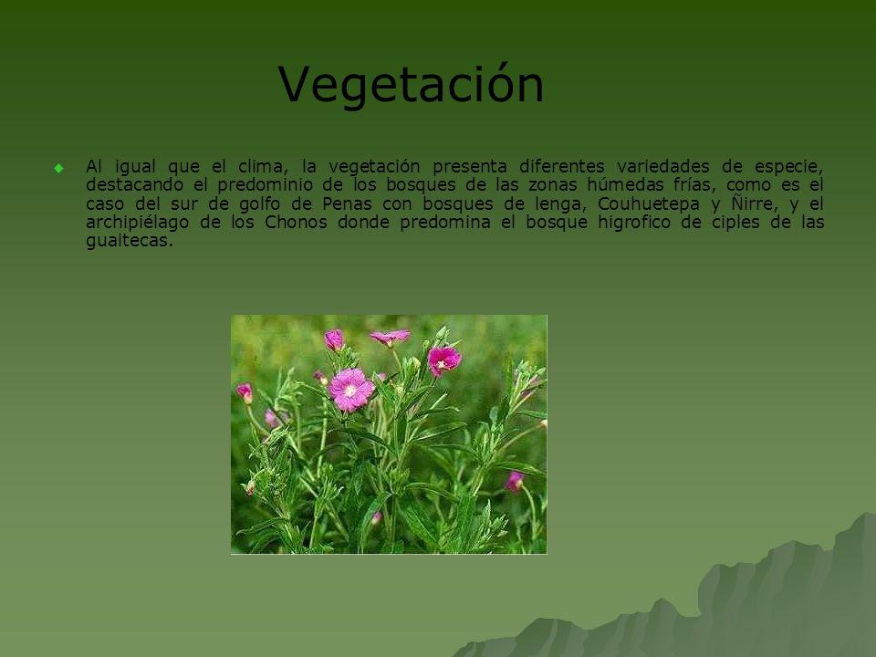 Vegetación Al igual que el clima, la vegetación presenta diferentes variedades de especie, destacando el predominio de los bosques de las zonas húmeda