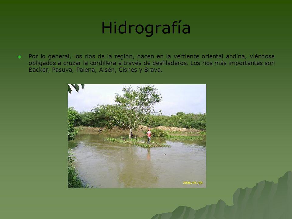 Flora Entre el sector occidental de archipiélagos y la vertiente occidental de los andes se desarrolla en virtud de las lluvias elevadas un bosque denso muy variado en especies (mañío, canelo, ciprés de guaitecas, coigüe).