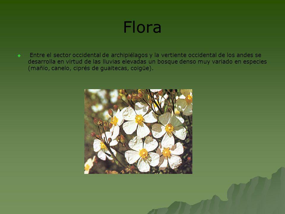Flora Entre el sector occidental de archipiélagos y la vertiente occidental de los andes se desarrolla en virtud de las lluvias elevadas un bosque den